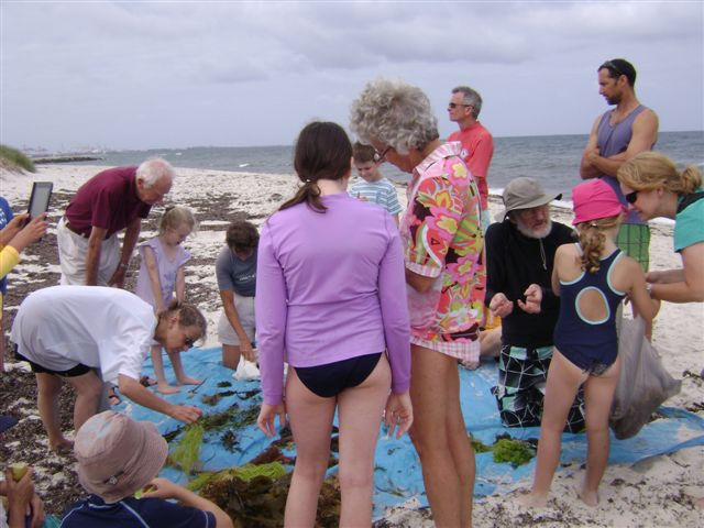 Naturalists Club members at Cottesloe Beach