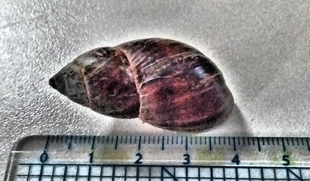 Denmark snail 1