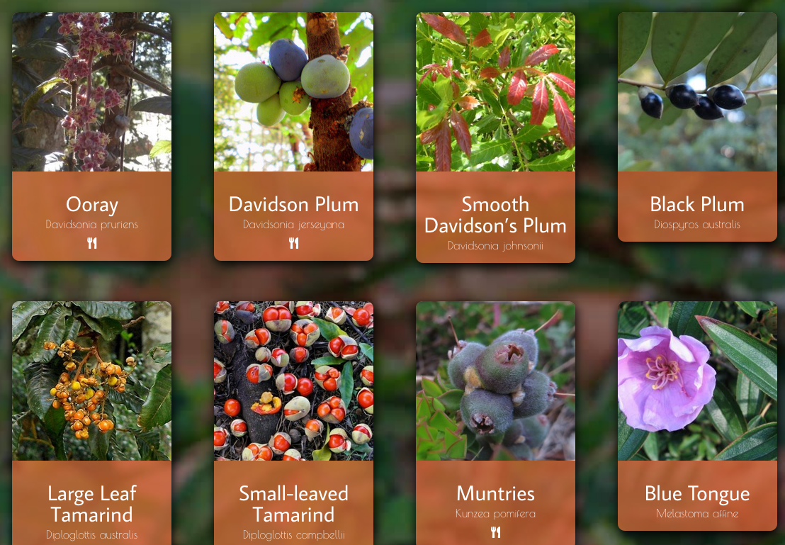 Tuckerbush range of plants inlcuding plums.png