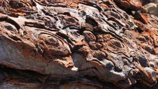 Stromatolites cropped.jpg
