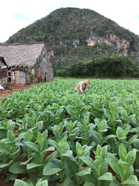 Tobacco Farm.jpg
