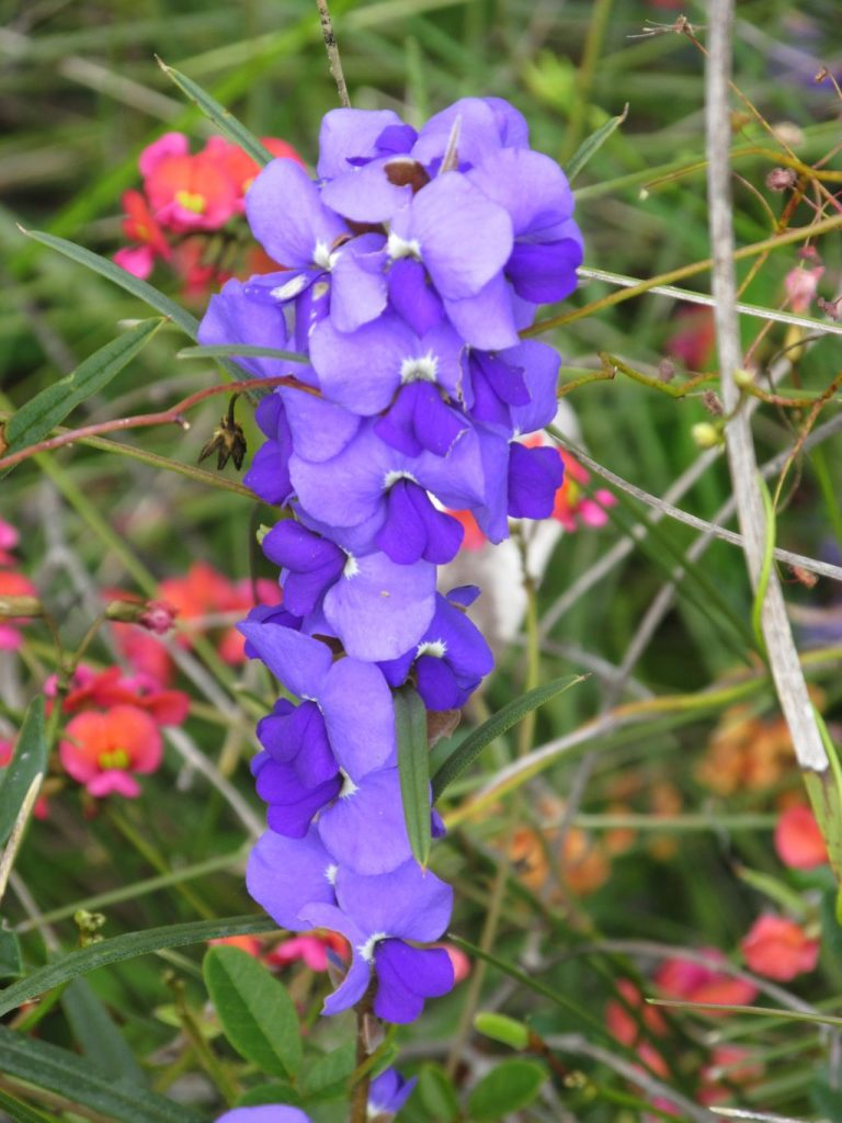 A purple flower on a plant Description automatically generated